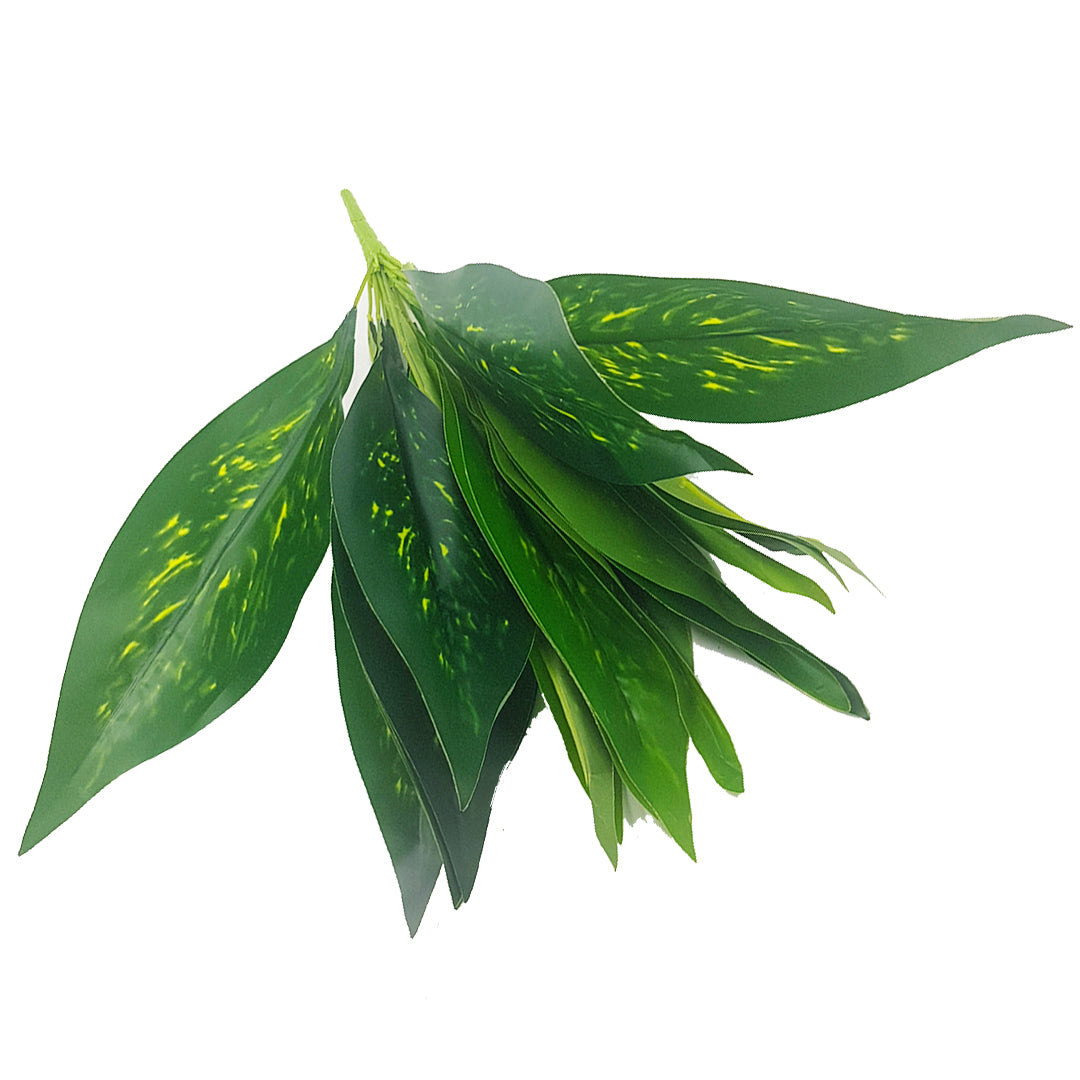 Tropical Plants - Dracaena Bunch