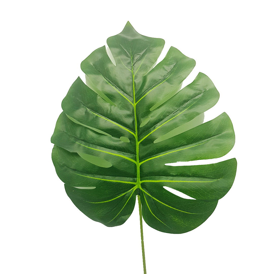 Tropical Plants -  Monstera Leaf Type 1