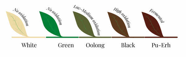 Levels of Oxidation for each type of tea: white, green, oolong, black, pu-erh