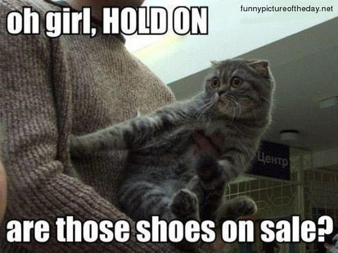Two Perfect Souls -Are those shoes on sale Cat