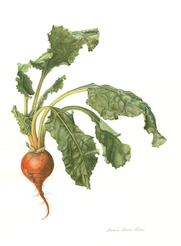 "e.  Golden Beet Limited Edition Print, 12"" x 16"""