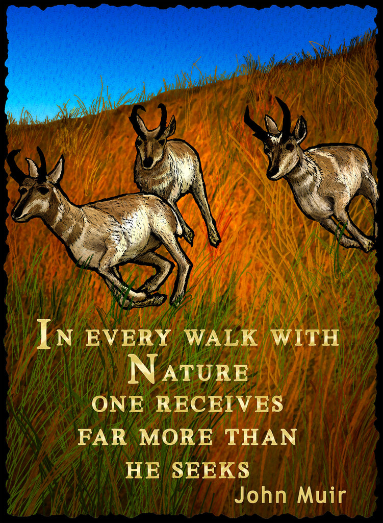In Every Walk With Nature - Nature #936