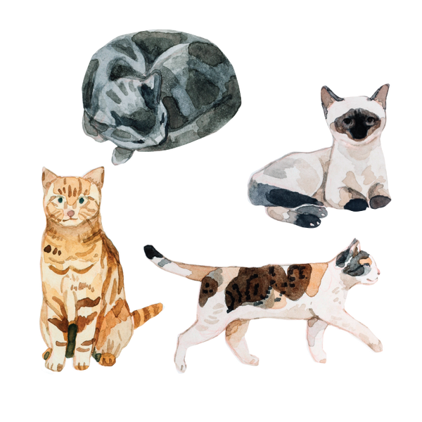 Artist Series Stickers: Cats (STC-514)
