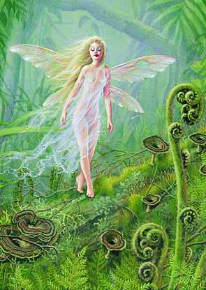 5 Maxine Gadd Greeting Cards -- Forest Sprite Fairy