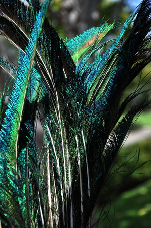 10 Peacock Side Tail Feather Swords