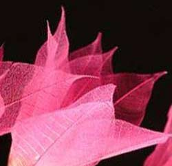 Pink Flower Skeleton Leaves String Lights -- 9 Feet in Length