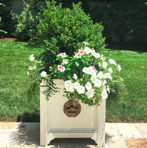 The Belle Planter