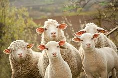 5 Ways to Make the Most Out of the New Year of the Sheep