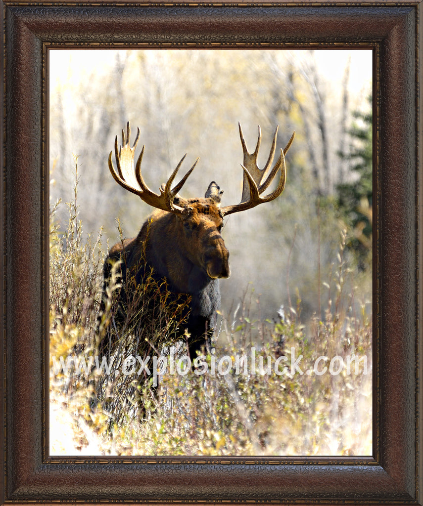buy feng shui wildlife painting featuring a moose at Explosion Luck