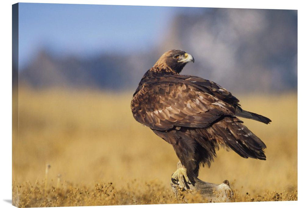 Buy Inspirational Photo Golden Eagle on a Snag – Explosion Luck