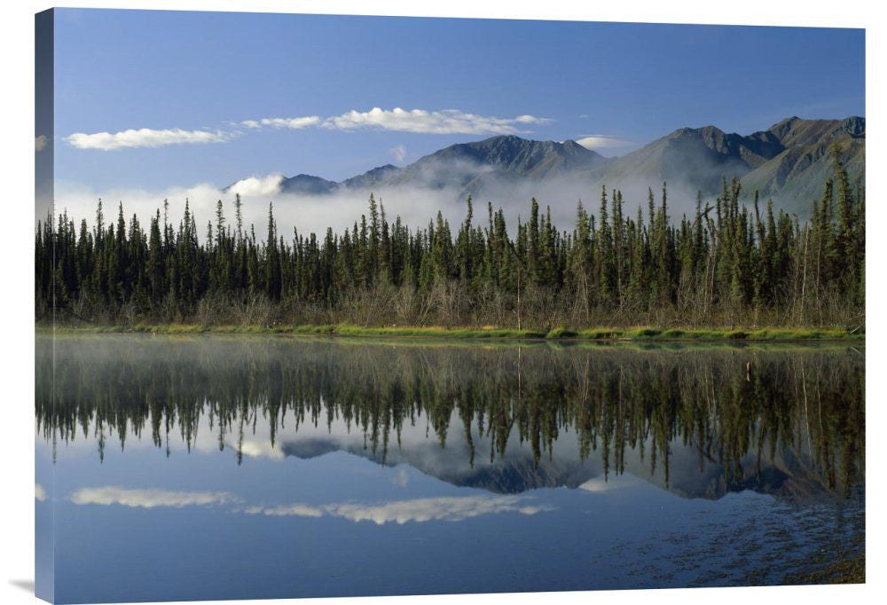 Boreal Forest Along Lake Edge