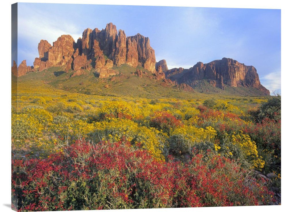 Chuparosa and Brittlebush Superstition Mountains