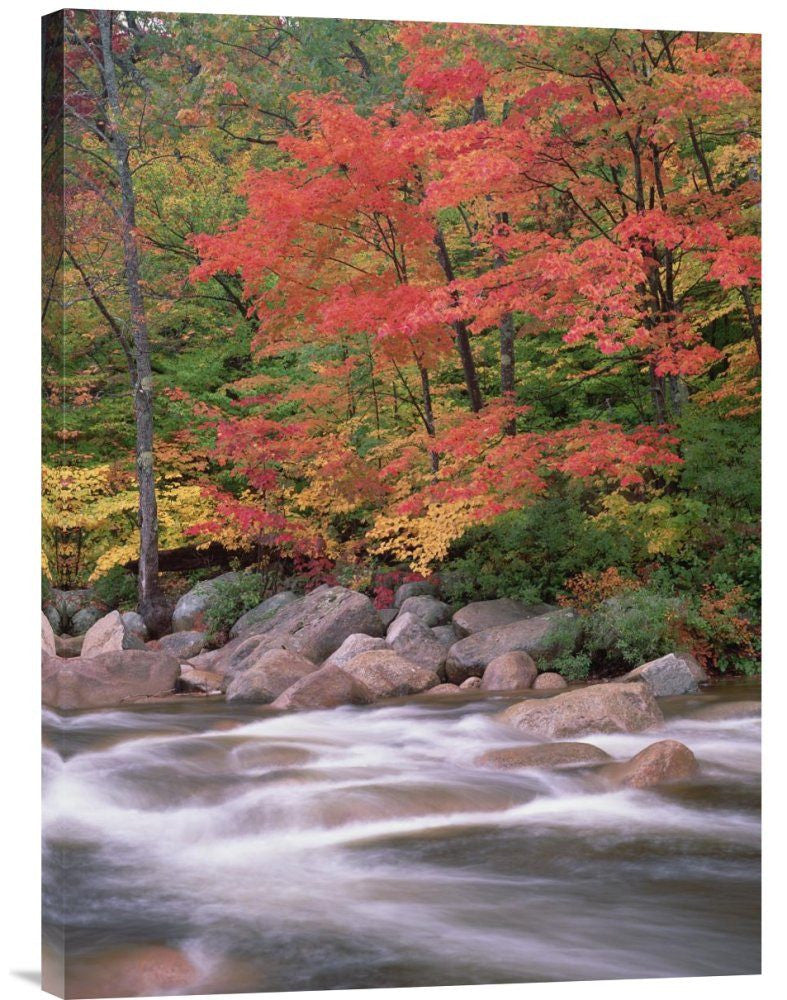 Autumn Along Swift River