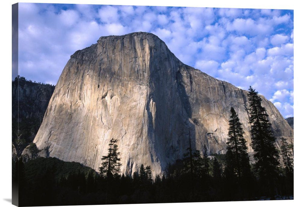 El Capitan Rising Over the Forest