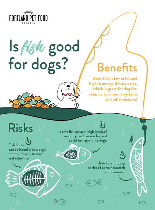 Is Fish Good For Dogs?