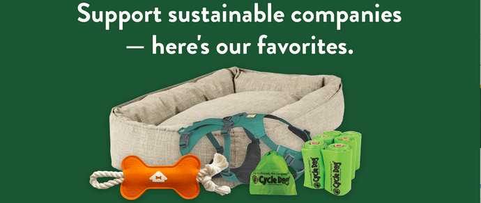 Our Favorite Sustainable Pet Brands