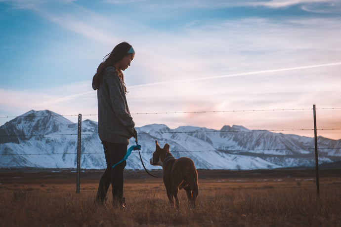 The Five Essentials For Hiking With Your Dog