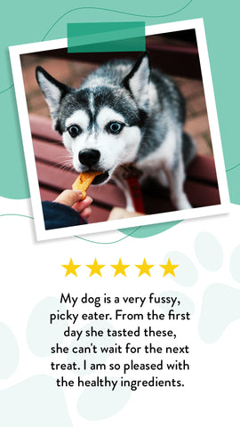A five-star review about our gluten-free pumpkin dog treats for picky dogs.
