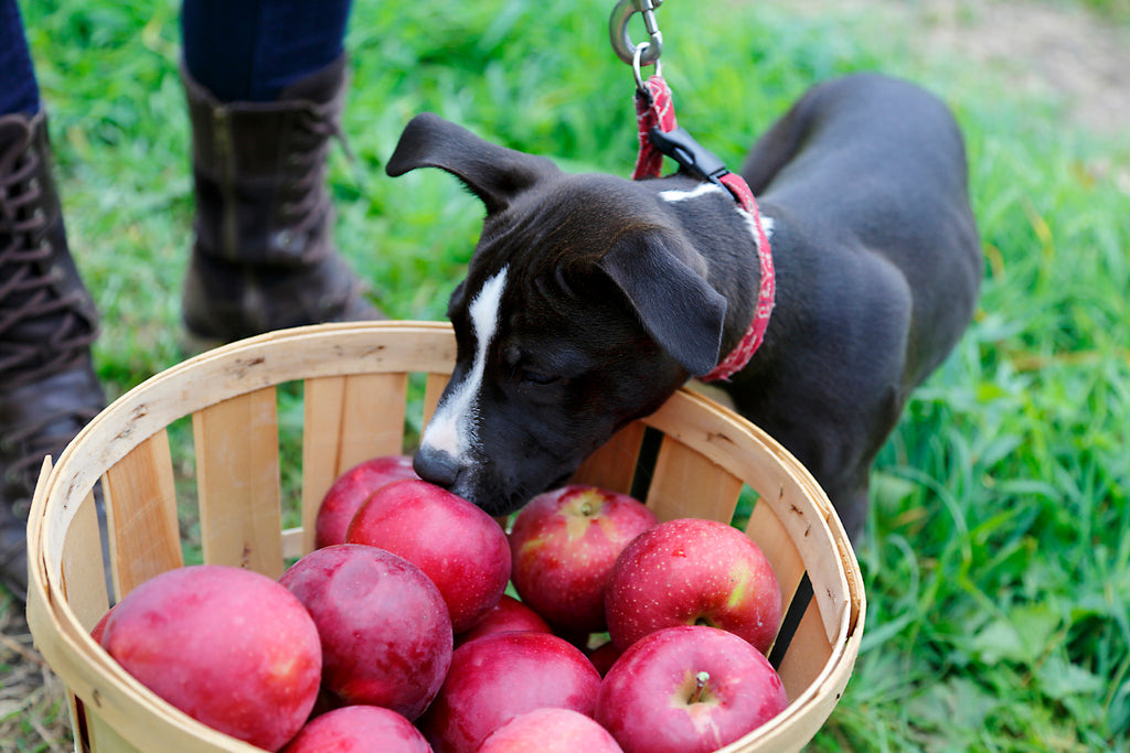 dog apple barrel portland pet food company
