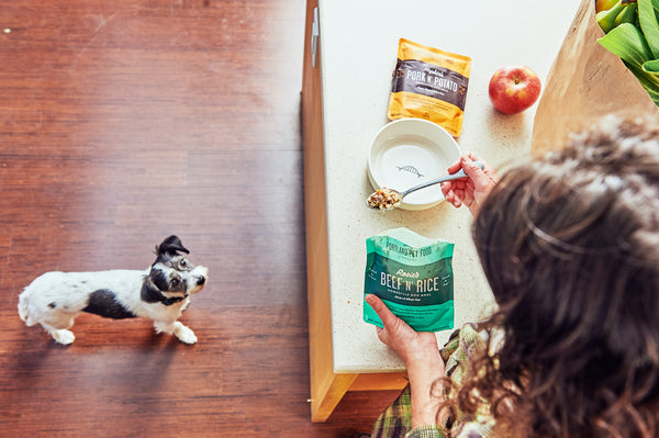 dog eating food out of a retort pouch portland pet food company