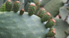 Why Our Skin Loves Prickly Pear Seed Oil: Ingredient Spotlight