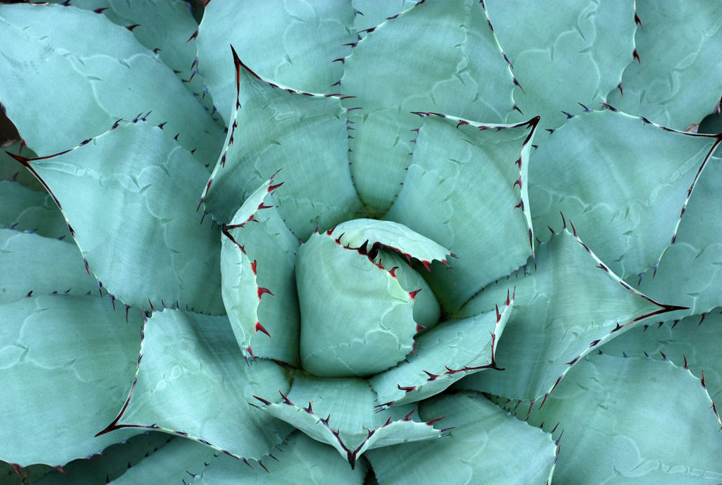 Why Our Skin Loves Aloe Vera: Ingredient Spotlight