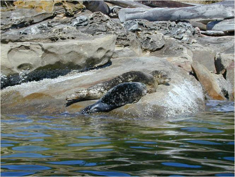 Guided Kayak Trip : 9 Days Nootka Island, British Columbia - Grand River Kayak Dunnville Ontario Canada
