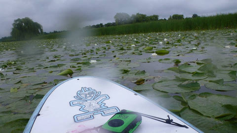 Guided Tour : Lower Grand River Marshes by SUP - Grand River Kayak Dunnville Ontario Canada