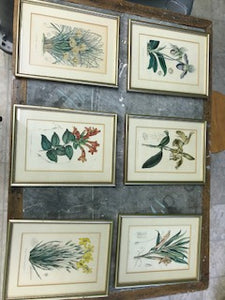 Set of Six Vintage Horto Van Houtteano Botanical Lithograph Prints