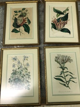 Load image into Gallery viewer, Floral Botanical Lithograph