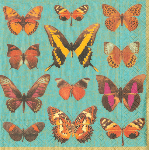 Deyrolle Butterflies Cocktail Napkin Box