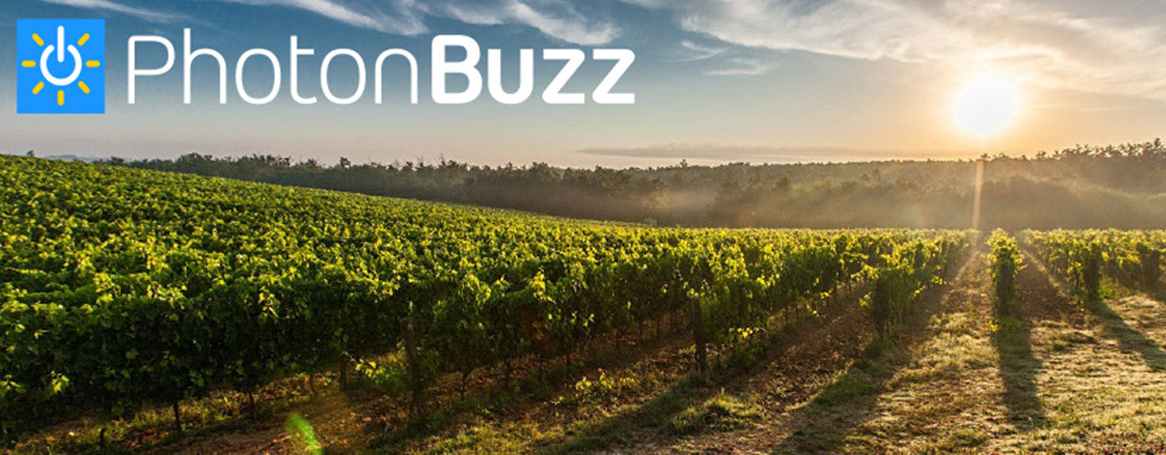 PhotonBuzz solar drenched winery