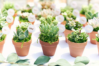Shop Succulents | Assorted Collection of Live Succulent Plants, Hand Selected Variety Pack of Mini Succulents | Collection of 20