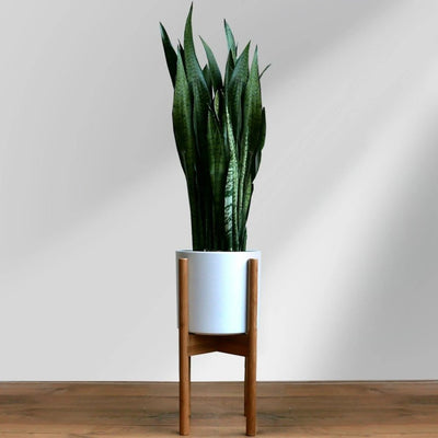 Bamboo Adjustable Mid Century Plant Stand