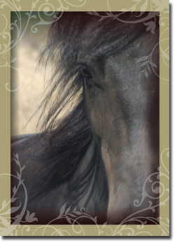 Divine West Horse Inspirational Greeting Card Faith GC08006