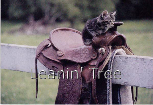 Leanin Tree Cowboy Kitty Thinking of You Greeting Card 55322