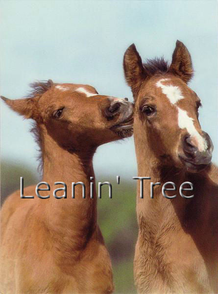 Leanin Tree I'll Follow You Horse Greeting Card LVG43672