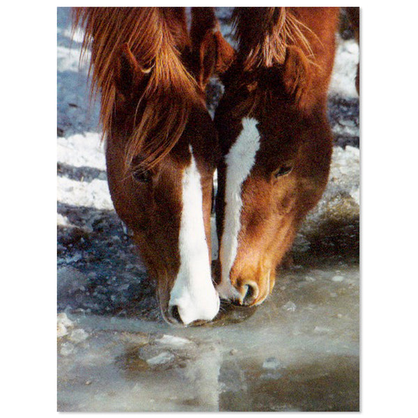 Leanin' Tree Let's Drink To Friendship Horses Greeting Card 43660