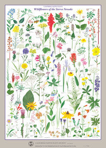 Wildflowers of the Sierra Nevada Poster