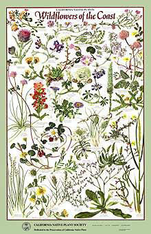 Wildflowers of the Coast Poster