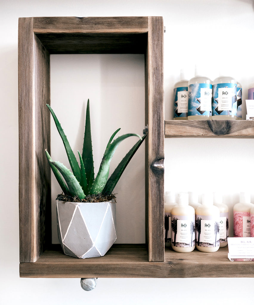 aloe plant on a floating shelf in a salon