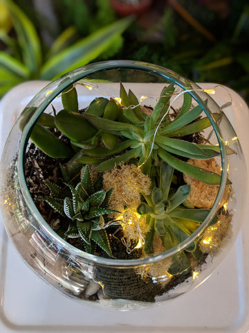 Wintery Succulent Terrarium Workshop