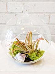 Laurel's Air Plant Terrarium