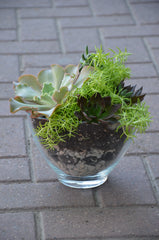 Mixed Succulent Oval Planter