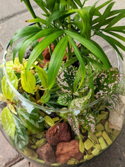 Laurel's Tropical Terrarium