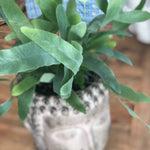 blue star fern in zen container