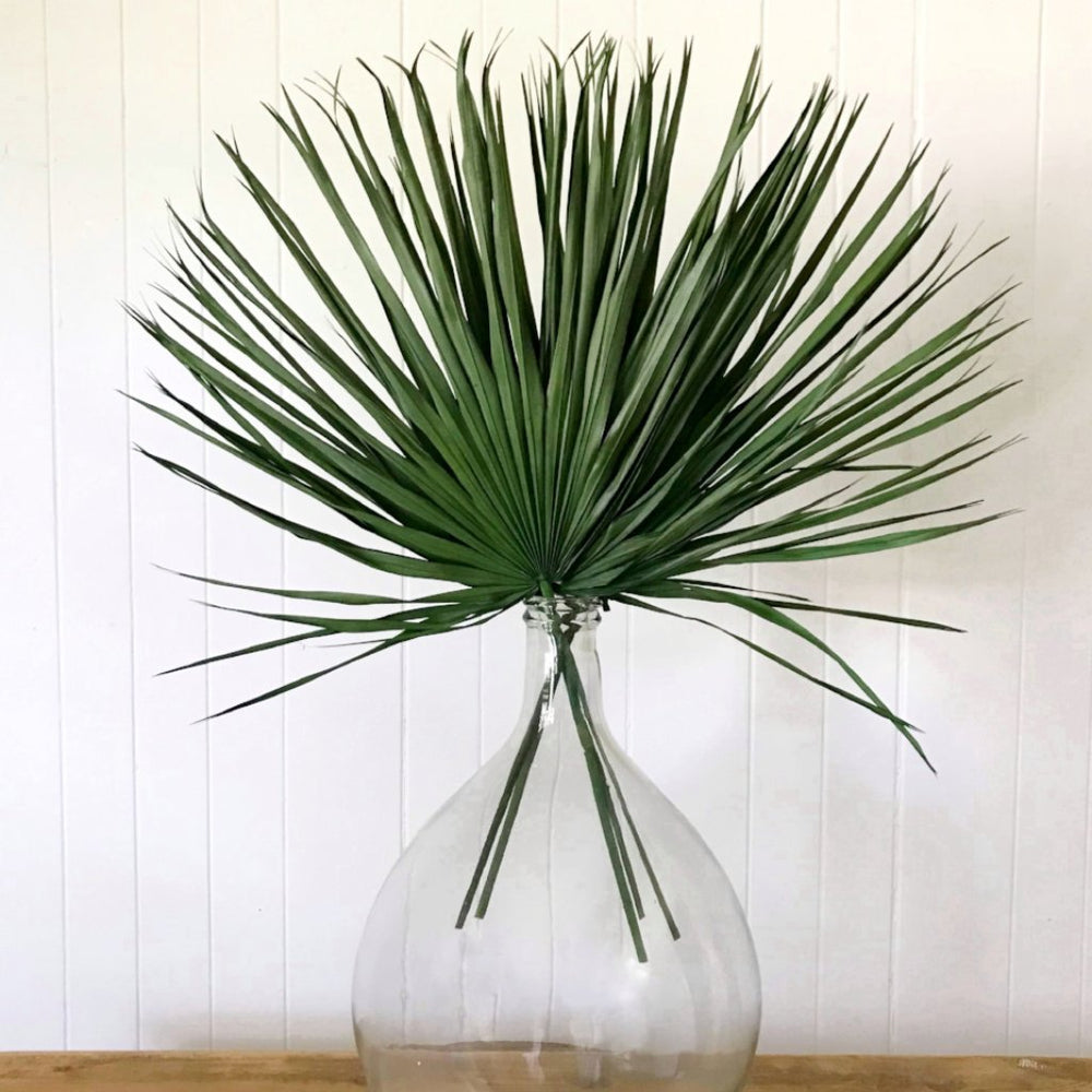 palmetto bundle
