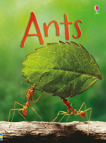 Ants Book