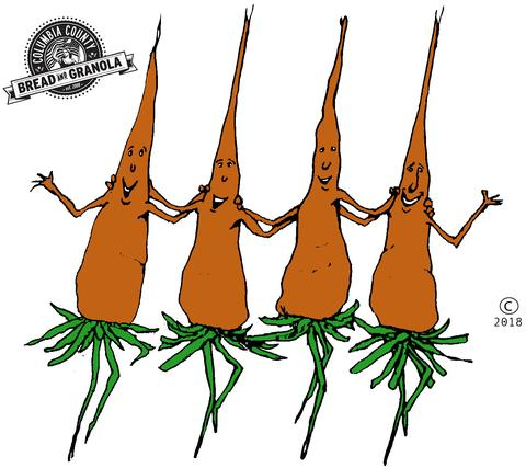 The dancing carrots interview