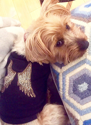 Angel Wings Dog Shirt in Black